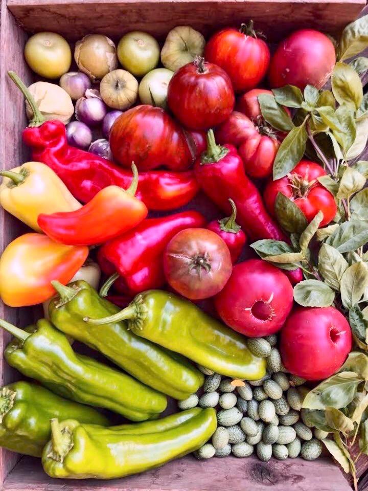 cesta di verdure